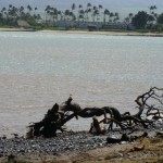 """Kahului Bay Shoreline """"Eroding at 2 Inches Annually"""""""