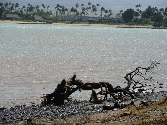 File photo by Wendy Osher. Kahului Harbor.
