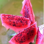 Dragon fruit is very popular in the Phillippines and is known for its therapeutic uses. Photo courtesy of MDFF.