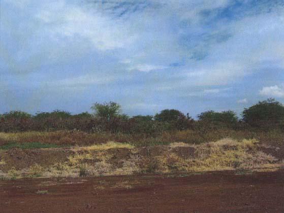 Kahoma Village Project.  View across project site from Front Street towards Honoapiilani Highway.  Photo courtesy DEA, Munekiyo & Hiraga.