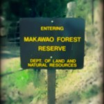 Missing Hiker Rescued at Makawao Forest Reserve