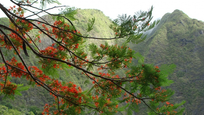 'Iao Valley photo by Wendy Osher.