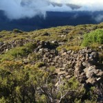 Critical Habitat Considered for 271,062 Acres on Maui