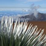 Silversword at Haleakala, photo by Wendy Osher.