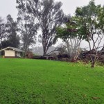 Wild Maui Weather, Downed Trees, Power Outages