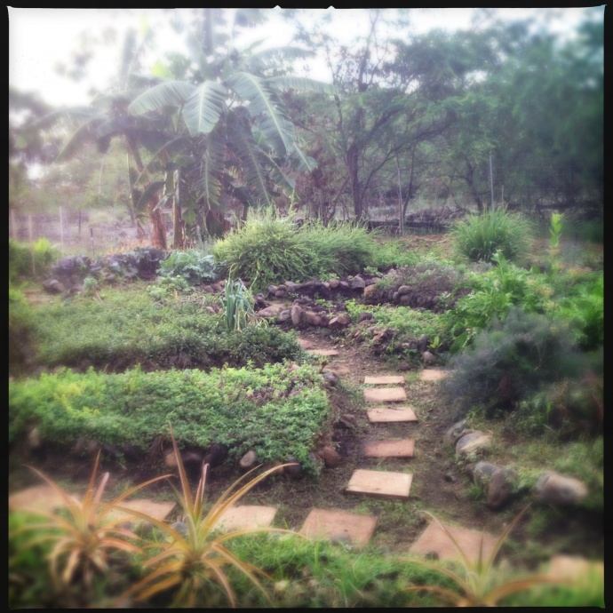 The Makena Beach and Golf Resort's herb and vegetable garden