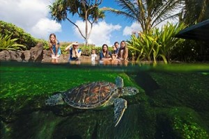 Scene from the Maui Ocean Center. Courtesy image.
