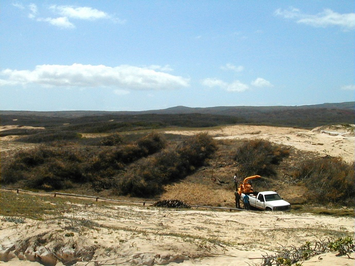 Kiawe being removed at Moʻomomi Preserve with chipper. Photo © Nature Conservancy