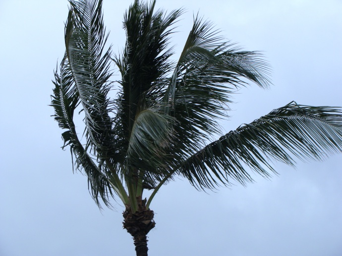 Blustery Winds Expected Statewide