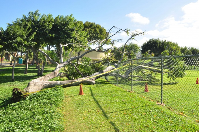 Ask the Mayor: Damages in Maui Parks