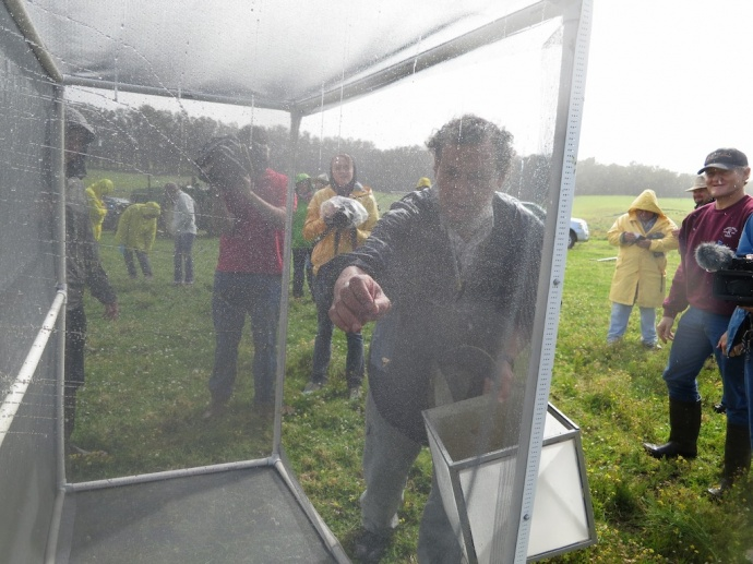 Dr. Mohsen Ramadan, exploratory entomologist for HDOA, releases moths from their enclosure. Courtesy photo.