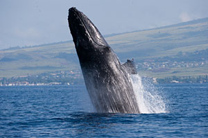 Photo courtesy Whale Trust.