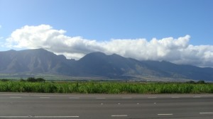 Central Maui sugar cane fields. File photo by Wendy Osher.