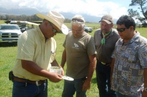 Maui ranchers Greg Friel of Haleakala Ranch, Jeff Alexander of Anuhea Ranch, Gerard Thompson of Thompson Ranch and Darcy Oishi, HDOA entomologist take a close look at the fireweed moth larvae that eat the leaves and stems of the fireweed plant.  Photo courtesy Hawaii Department of Agriculture.