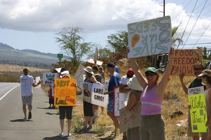 The anti-GMO protest on Piʻilani Hwy near the Monsanto headquarters, October 2011. File photo by Madeline Ziecker.