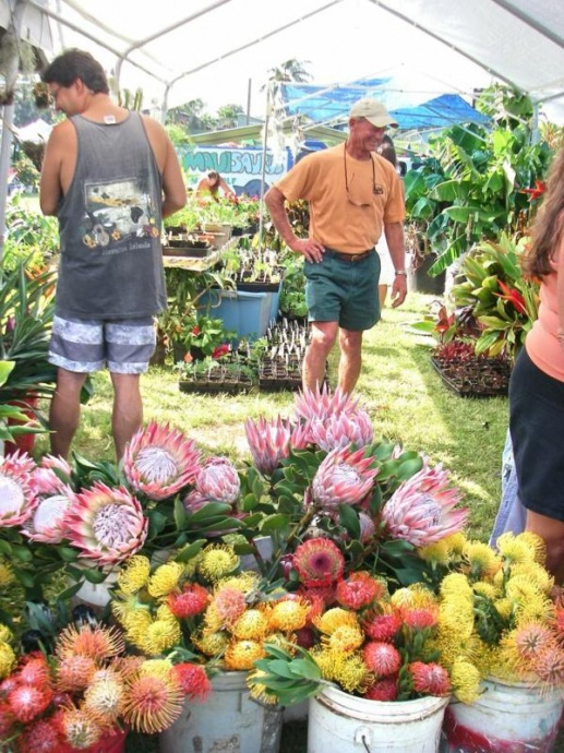 Photo courtesy 2012 Haiku Ho'olaule'a & Flower Festival