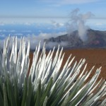 Haleakalā silversword landscape. Photo by Wendy Osher.