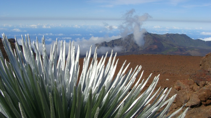 Haleakalā silversword landscape. Photo by Wendy Osher.