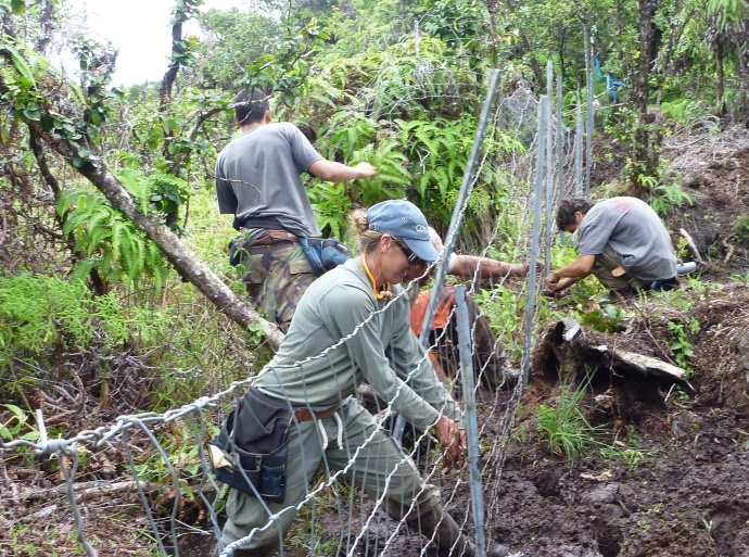 Hanawi Natural Area Reserve fence construction. Photo courtesy DLNR.