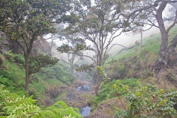 Leeward Haleakala Kahikinui Forest. Photo courtesy DLNR.