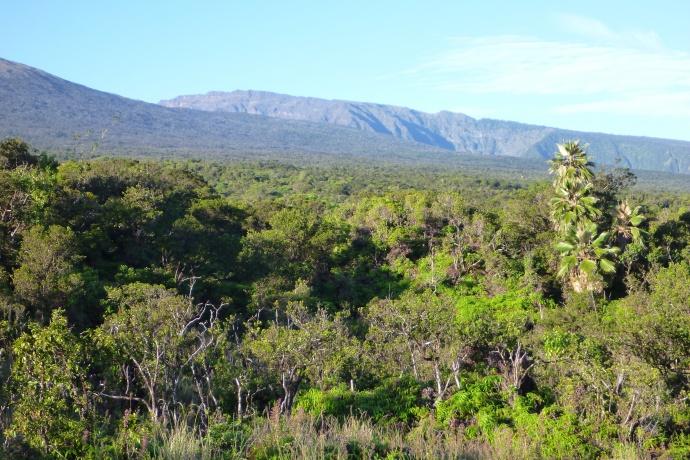 North Haleakala Hanawi Natural Area Reserve. Photo courtesy DLNR.