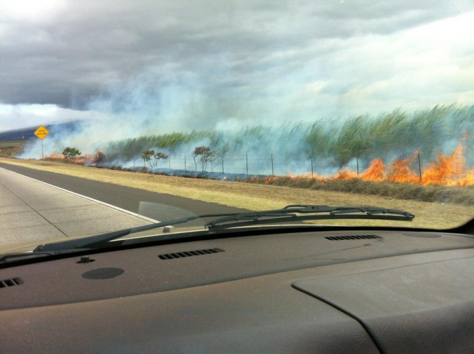 Cane fire by the road. File photo courtesy Philip Guenther.