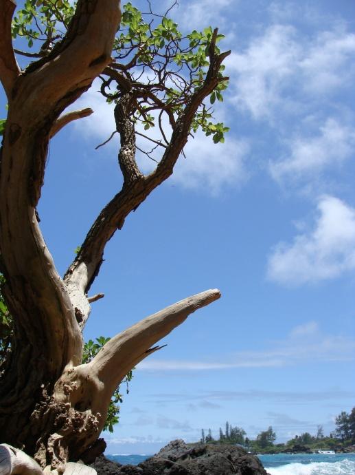 Lehoʻula at Hāna, Maui. Photo by Wendy Osher.