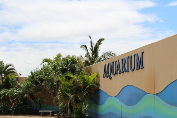 Maui Ocean Center. Photo by Wendy Osher.
