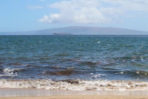 Shark signage posted at Ulua Beach in Wailea, 7/31/13. Photo by Wendy Osher.