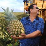 Maui Pineapple Crop, courtesy photo.