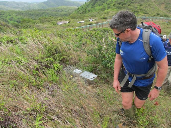 Steve Sawyer of Ecoworks (New Zealand) inspecting a mongoose trap.  Courtesy photo.