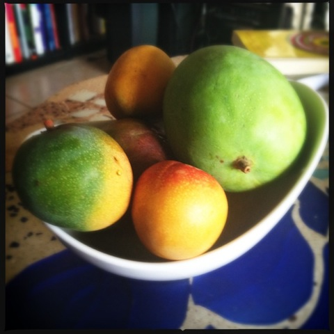 A bowl of mangos. Photo by Vanessa Wolf