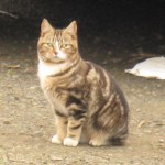 "Feral Cats Weigh in on ""Feral Cat Problem"""