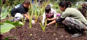 Families working in the garden at The Maui Farm. File photo, courtesy image.