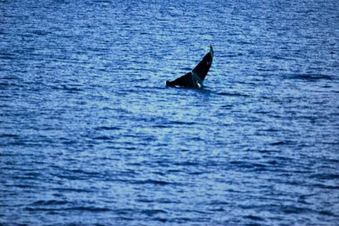 whale entangled photo-tony-murri-2013-11-12