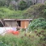 Maui Homeless Alliance Spearheads Community Forum