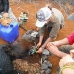 Photo courtesy: Kaho'olawe Island Reserve Commission.