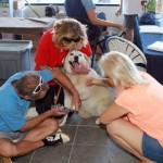 SPCA Maui pet services.  Photo courtesy SPCA Maui.