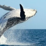 Four Course Dinner Cruise Benefits Pacific Whale Foundation