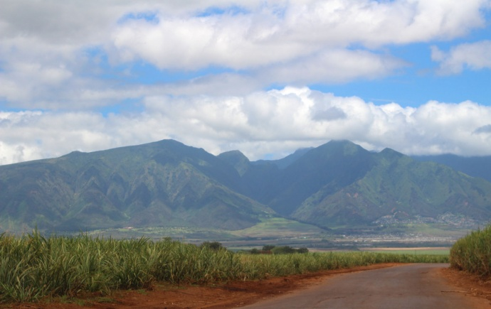 HC&S sugar cane fields in Kahului. Photo by Wendy Osher.
