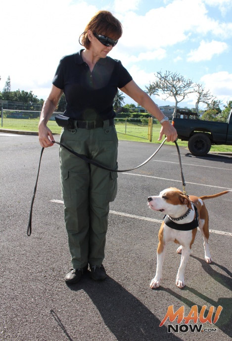 """A search party for Carly """"Charli"""" J. Scott gathered at the Haʻikū Community Center this morning. Photo by Wendy Osher."""