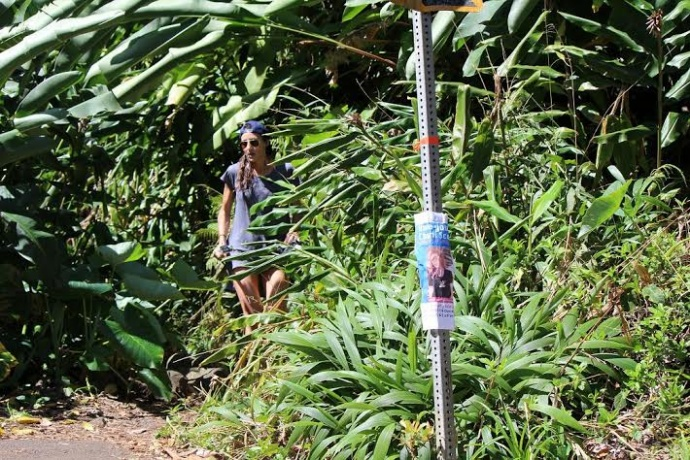 """Signs have been posted at various points along the Hāna Highway in East Maui, alerting the public of the search for """"Charli"""". Photo 2/15/14 by Wendy Osher."""
