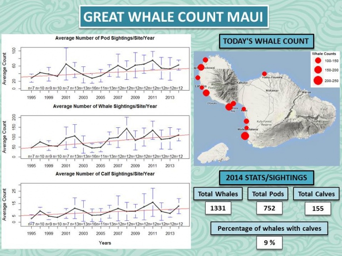 Great Whale Count 2014.