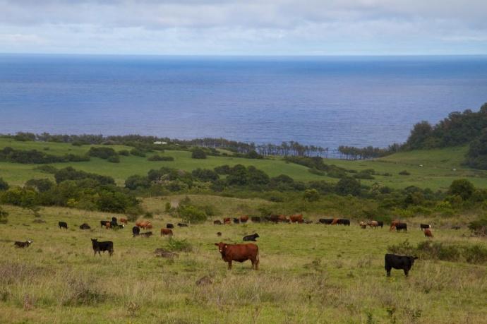 The fields of Hana Ranch. Courtesy photo.
