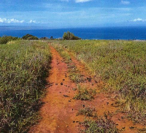 Proposed site of West Maui Exploratory Well 2, west view of existing road near proposed project site. Photo courtesy DEA, state of Hawaii Department of Health and Munekiyo & Hiraga.