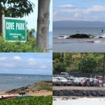 Cove Park Incident Likely Not a Shark Bite