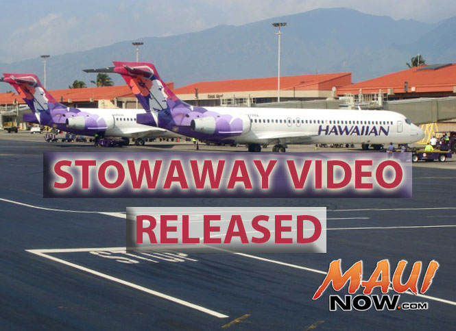 Stowaway video released. Maui Now graphic.
