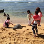These photos illustrate DLNR's concern with people getting too close to green sea turtles (honu) at Ali'i Beach.