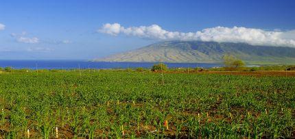 Photo courtesy Monsanto Hawaii.