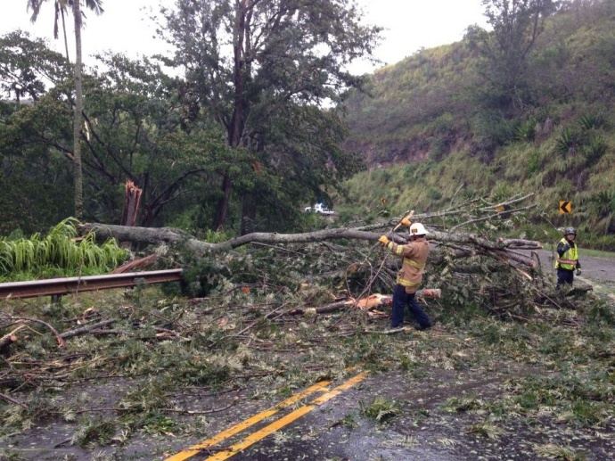 County crews work to clear a downed tree near Maliko Gulch on Maui, 7/20/14.  Photo courtesy County of Maui.